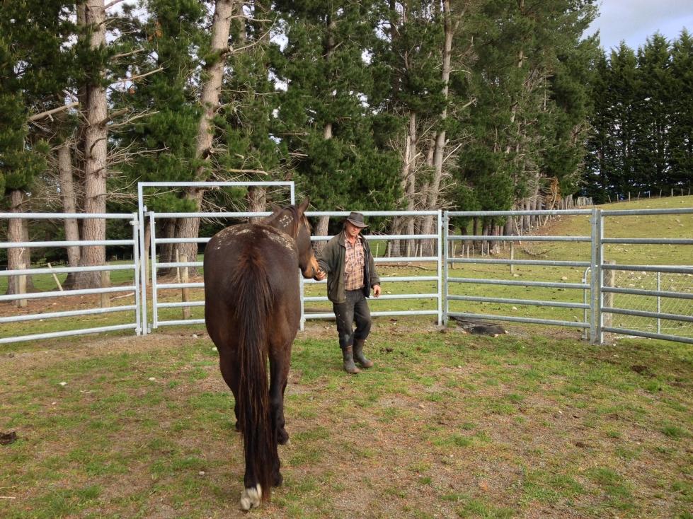 South Island Horsefarm 02