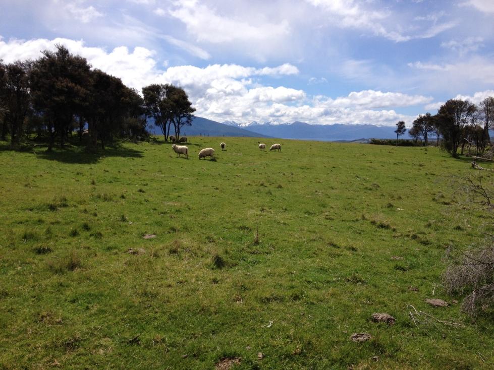 South Island Horsefarm 06