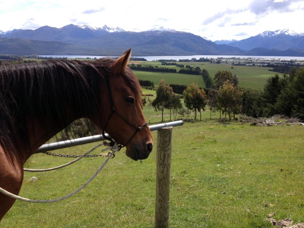 South Island Horsefarm 07