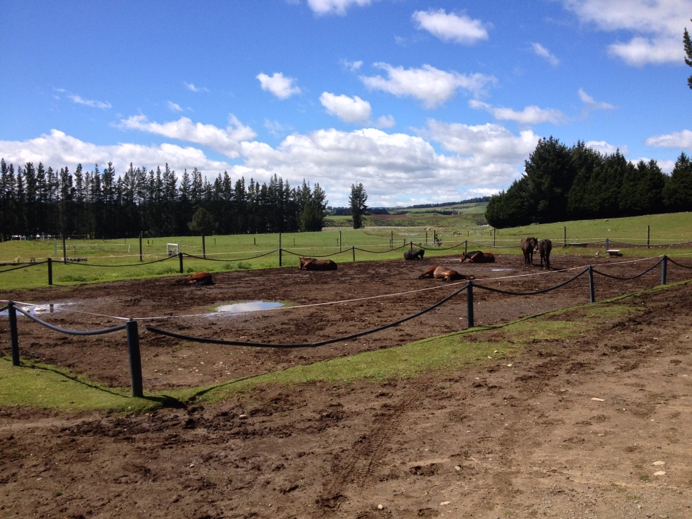 South Island Horsefarm 11