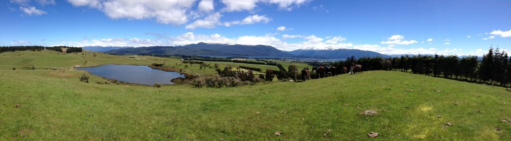 South Island Horsefarm 14